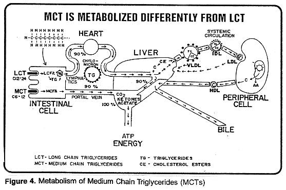 Metabolism of MCT Coconut Oil