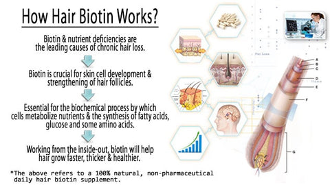 5 Must Know Benefits Of Biotin Me First Living