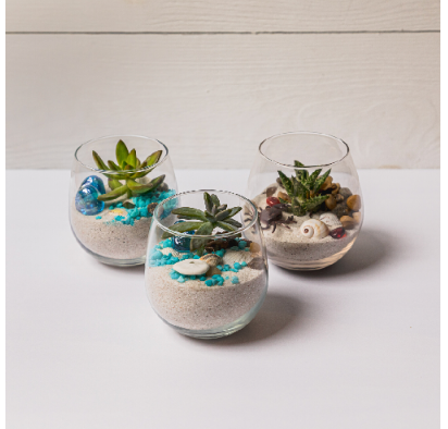 3 Piece Succulent Pack