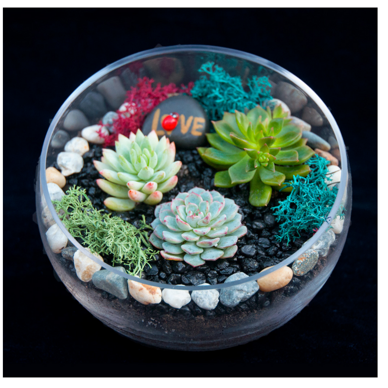 Beautiful Slope Bowl Planter Kit For Blue Beam