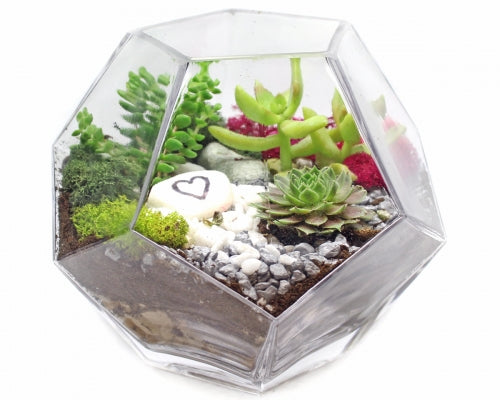 Pyramid Planter Kit for Genentech