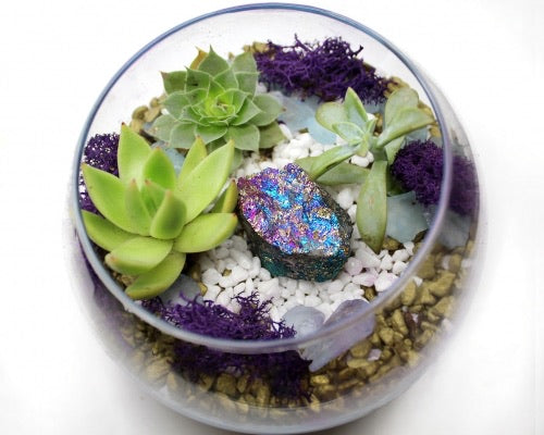Peacock crystal Planter Kit