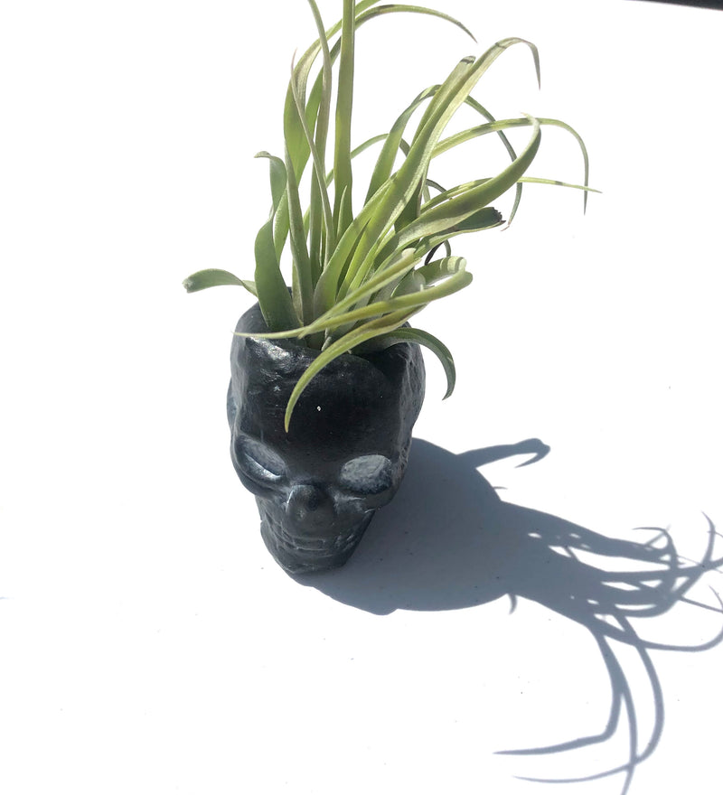 Black Skull Air plant Planter