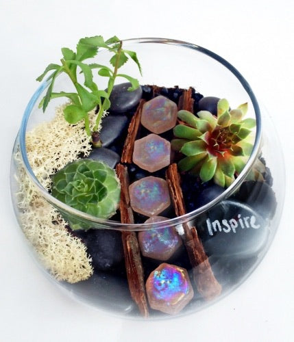 Inspire Glass Planter Kit