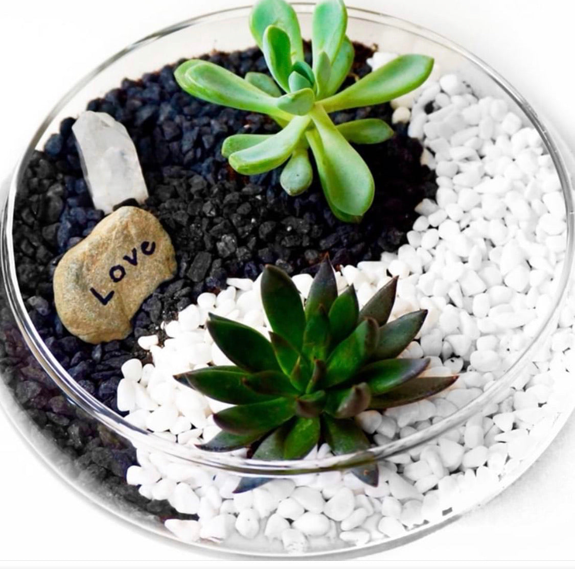 Ying Yang  Lilly Bowl  Planter Kit