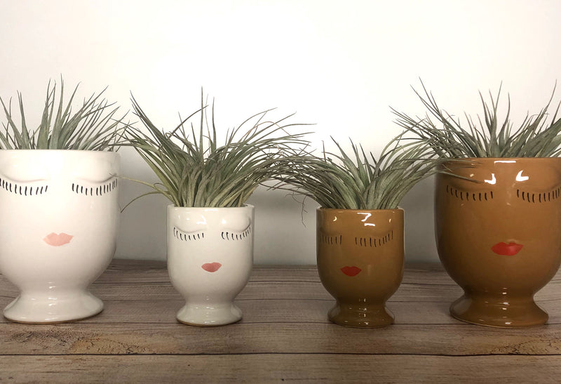 Celfie Medium  Planter kit