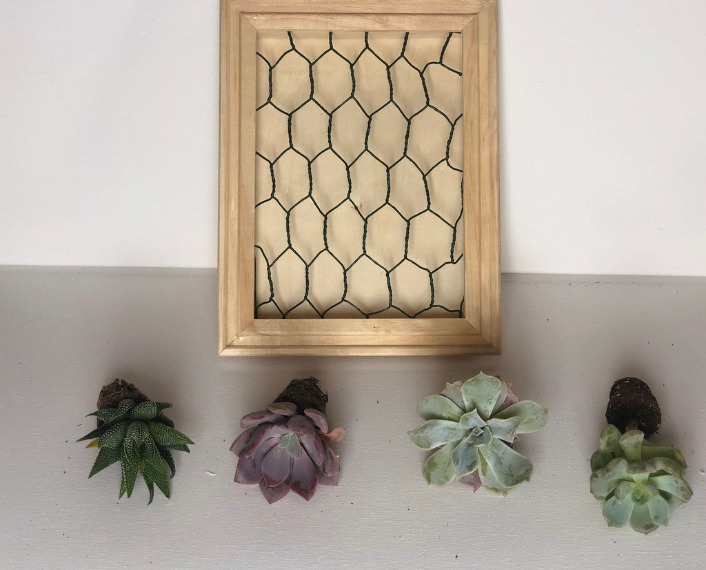 Shadowbox Succulent Kit