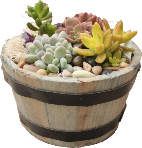 Whiskey Barrel Planter-linked in