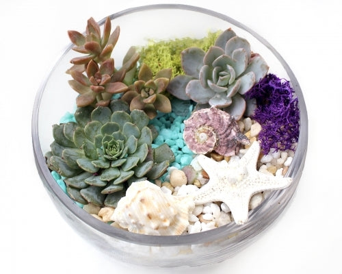 Seaside Slope Bowl Planter Kit