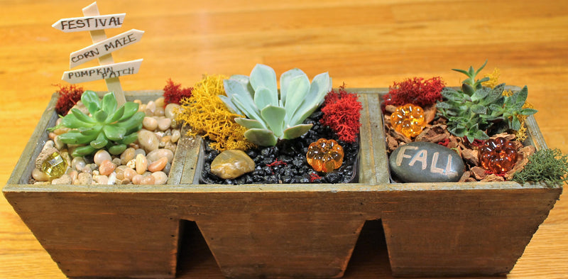DIY Fall Split Terrarium