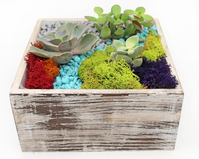 Roxy Wooden Planter Kit