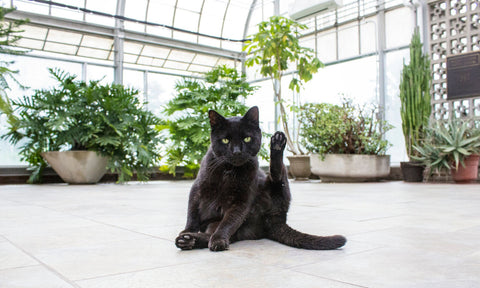 Non-toxic plants for cats and dogs