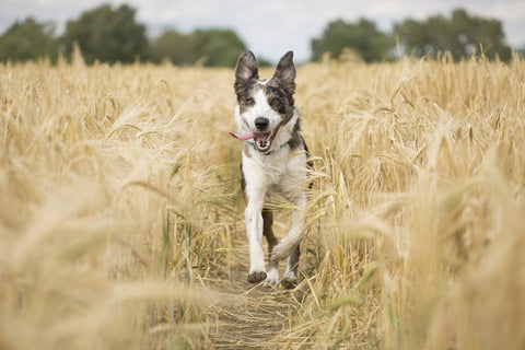 How much exercise do dogs need