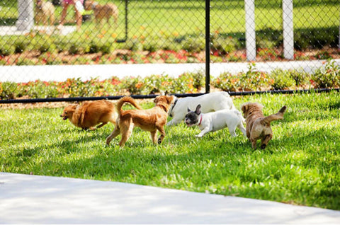 Dogs and Puppies playing