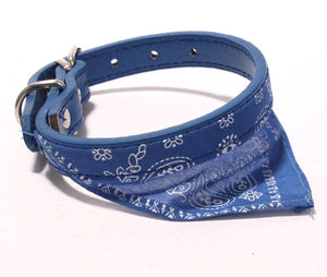 Scarf Collar - The Pet Supply