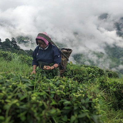Origin Report: Darjeeling