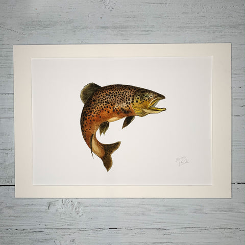 Brown Trout - Fine Art Print, (A3)