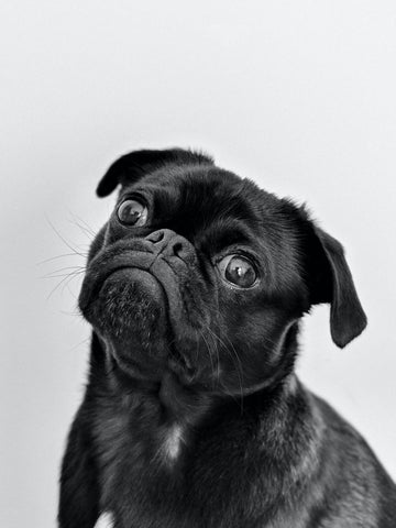 Photo by Charles from Pexels. Confused Puppy About Clean Beauty and Skincare