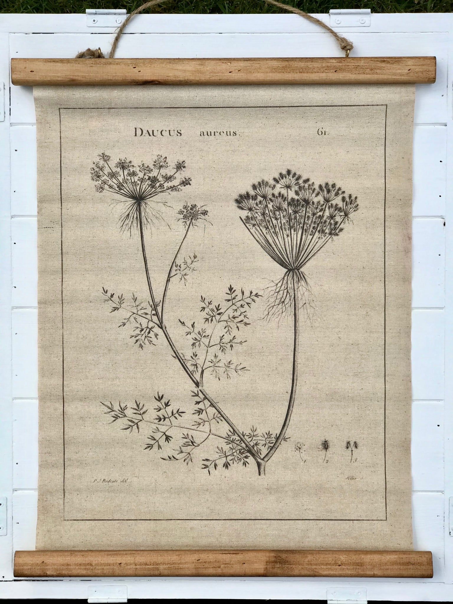 Queen Anne's Lace Scroll