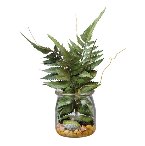 Small Boston Fern in Jar
