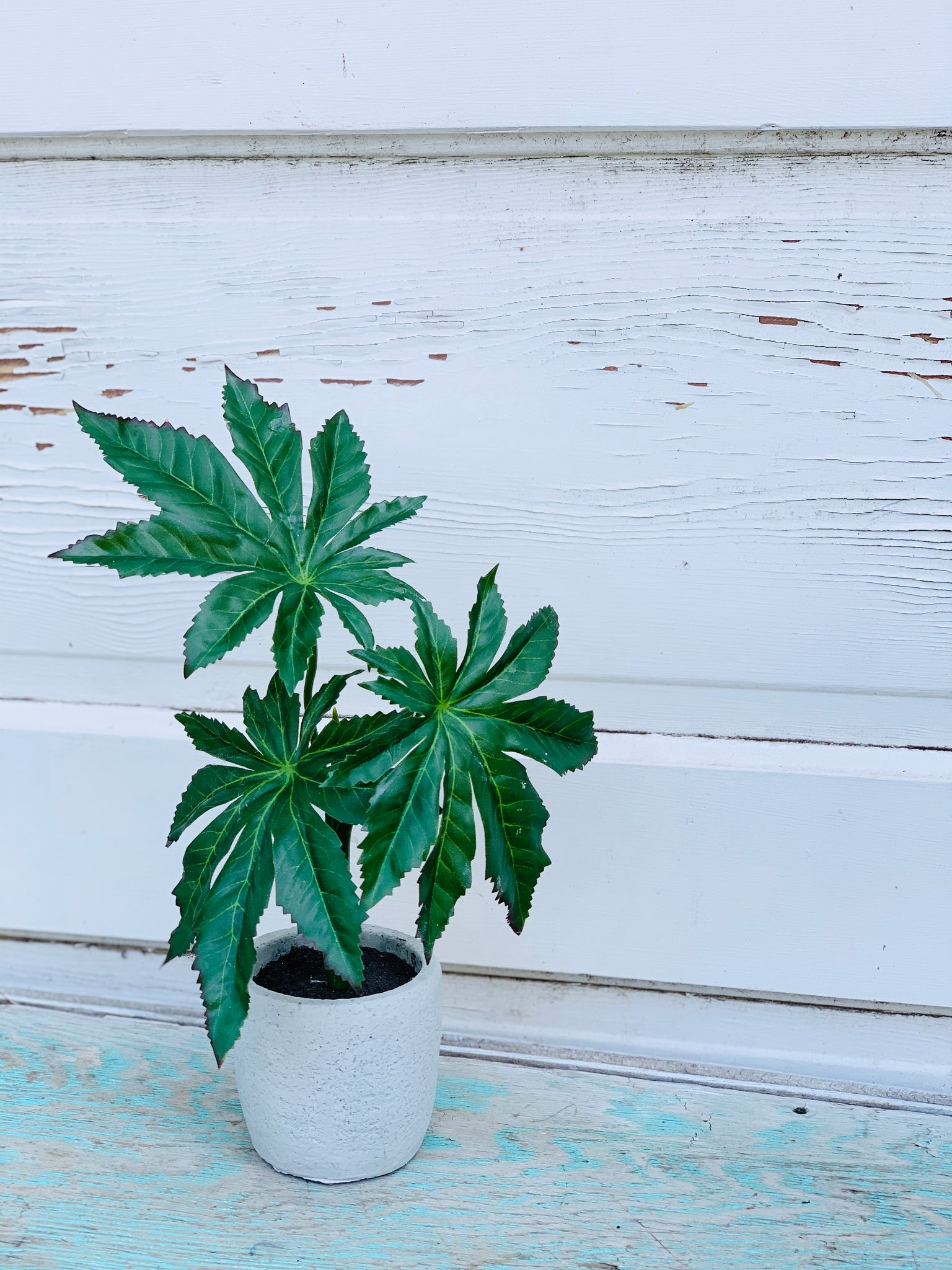 Potted Foliage Plant