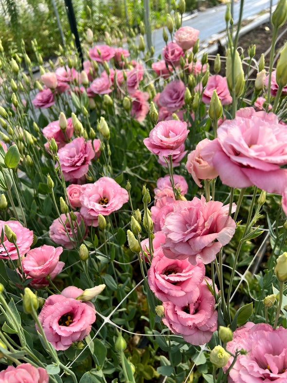 Order Flowers for August 13
