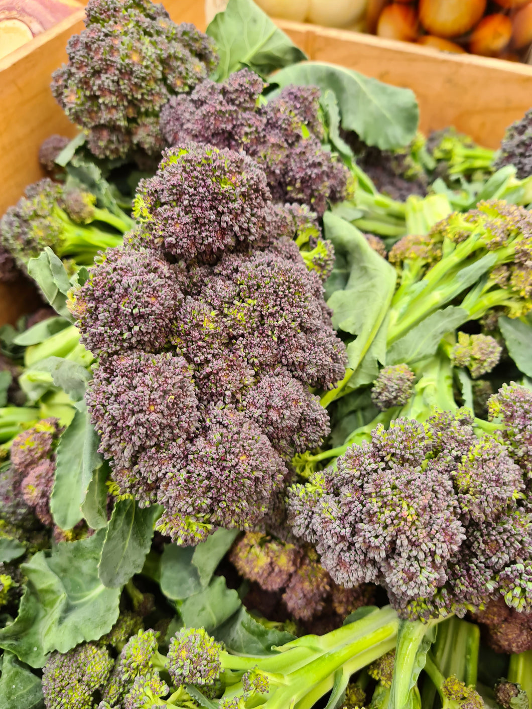 English Purple Sprouting Broccoli 500g