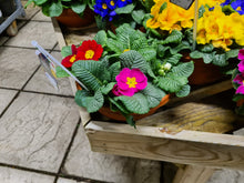 Load image into Gallery viewer, Primrose Planted Bowl