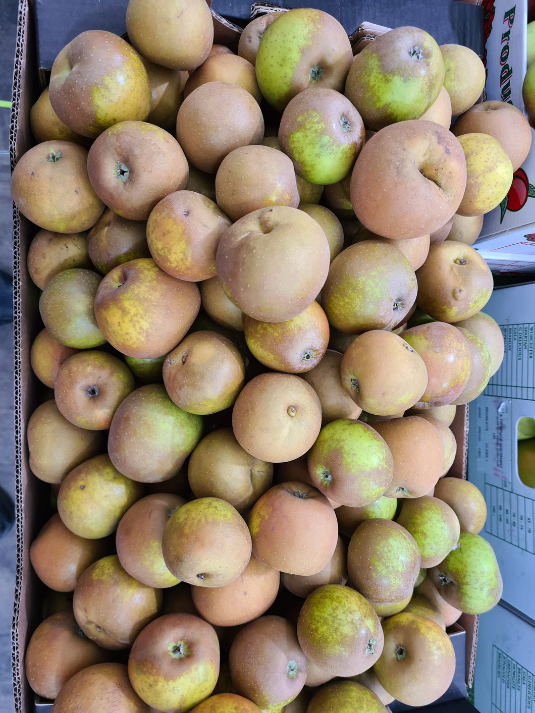 English Russet Apples (Each)