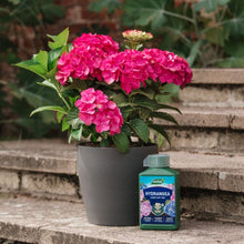 Load image into Gallery viewer, Westland Hydrangea Liquid Feed 1L