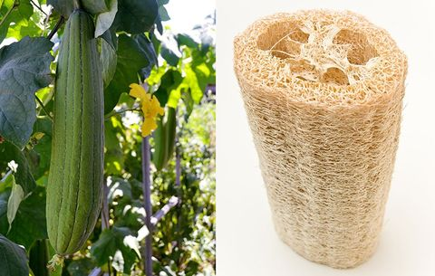 CareMore about your Skin use a Natural Loofah