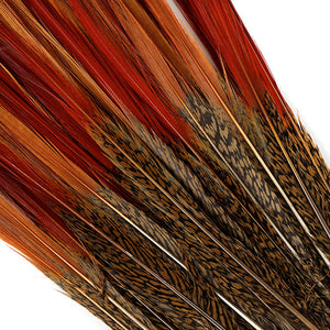 "Golden Pheasant Tail 10"" - 12"" Golden Red Top"