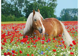 HORSE IN THE POPPY FIELD 500 PIECE