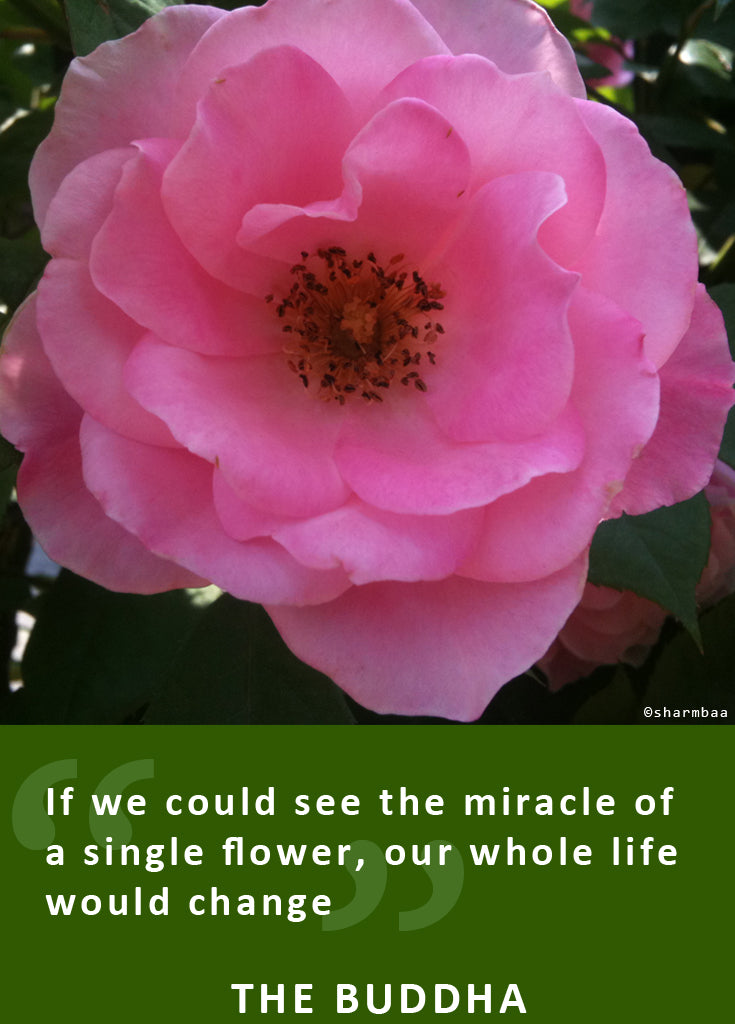If we could see the miracle of a single flower, our whole life would change. - The Buddha