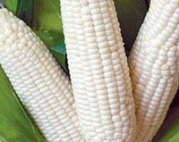 Fresh White Corn on the Cob (We husk it for you for free!)