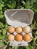 Eggs - Medium Free Range