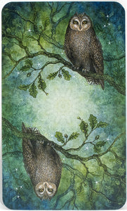 Tarot Cards - Forest of Enchantment Tarot