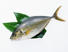 Load image into Gallery viewer, Shima Aji (Striped Jack) Farmed 2.5 LB/PC