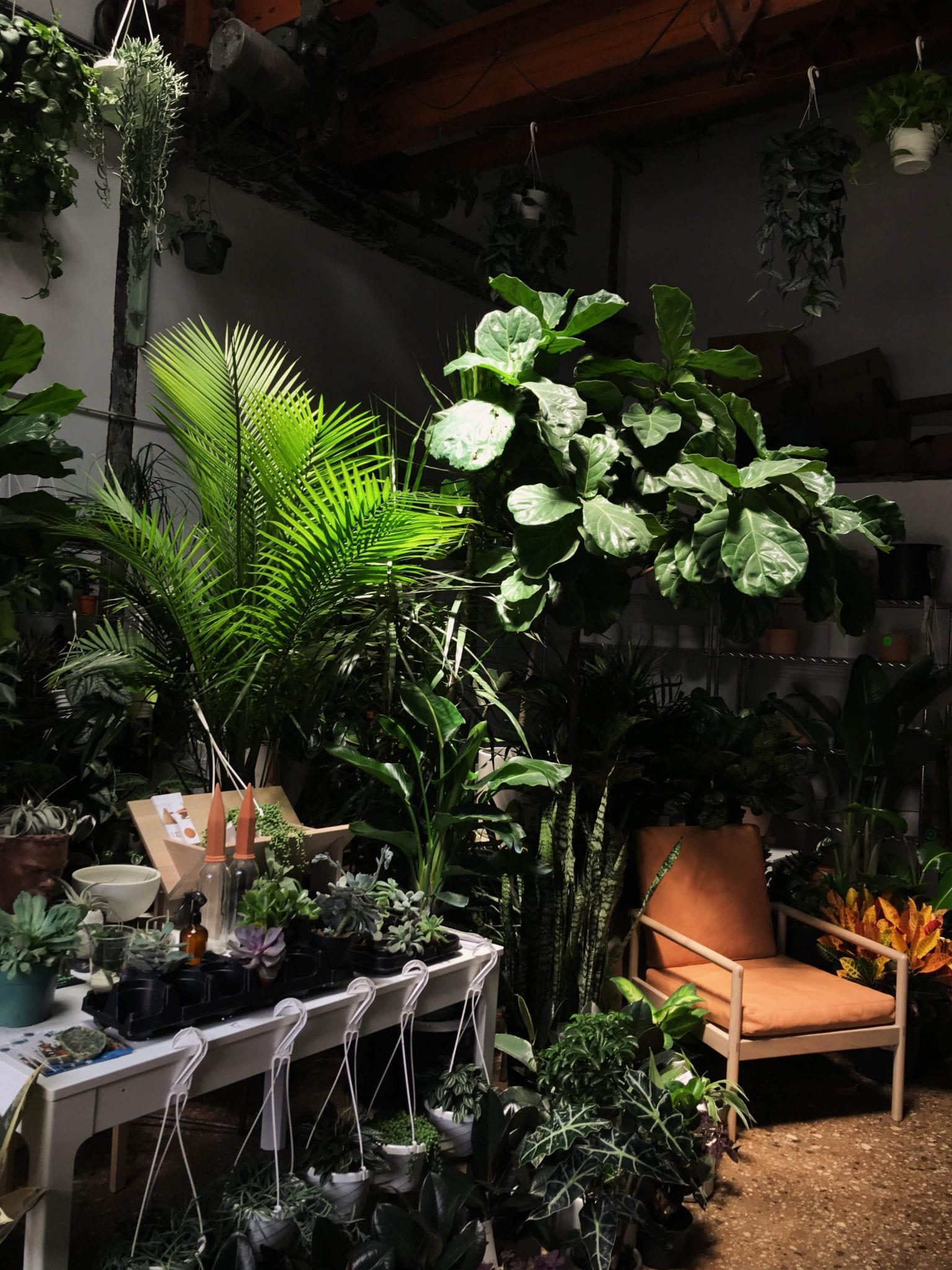 Houseplants improve air quality in your home