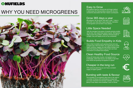 What Are Microgreens And Why You Need Them In Your Life