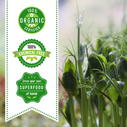 The Starter Kit | Certified Organic Microgreen Grow Kit