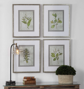 Stem Study Framed Prints, S/4