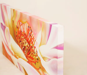 Wildfire - White Rose Flower Oil Painting
