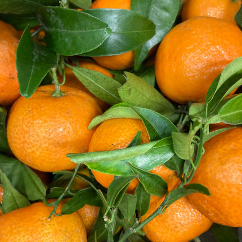 Leafy Clementine Box 1.5Kg