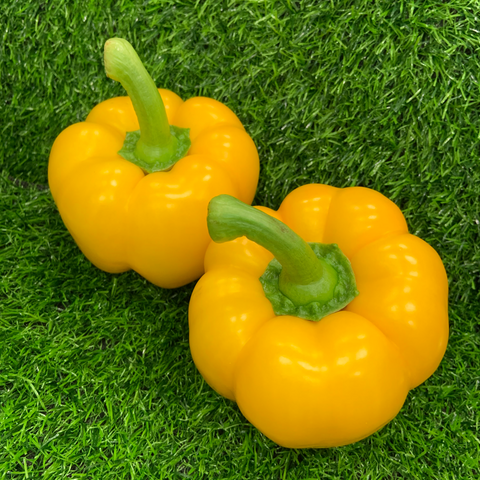 Yellow Pepper Each
