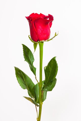 Beautiful packed red rose with your package (artificial)