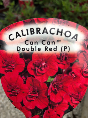 Calibrachoa Can Can Red (Million Bells)