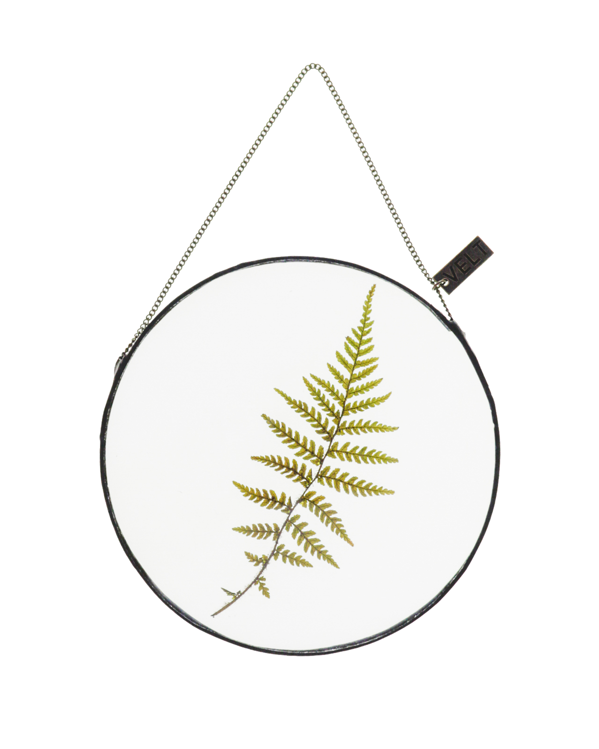 FERNS ROUND (SMALL)