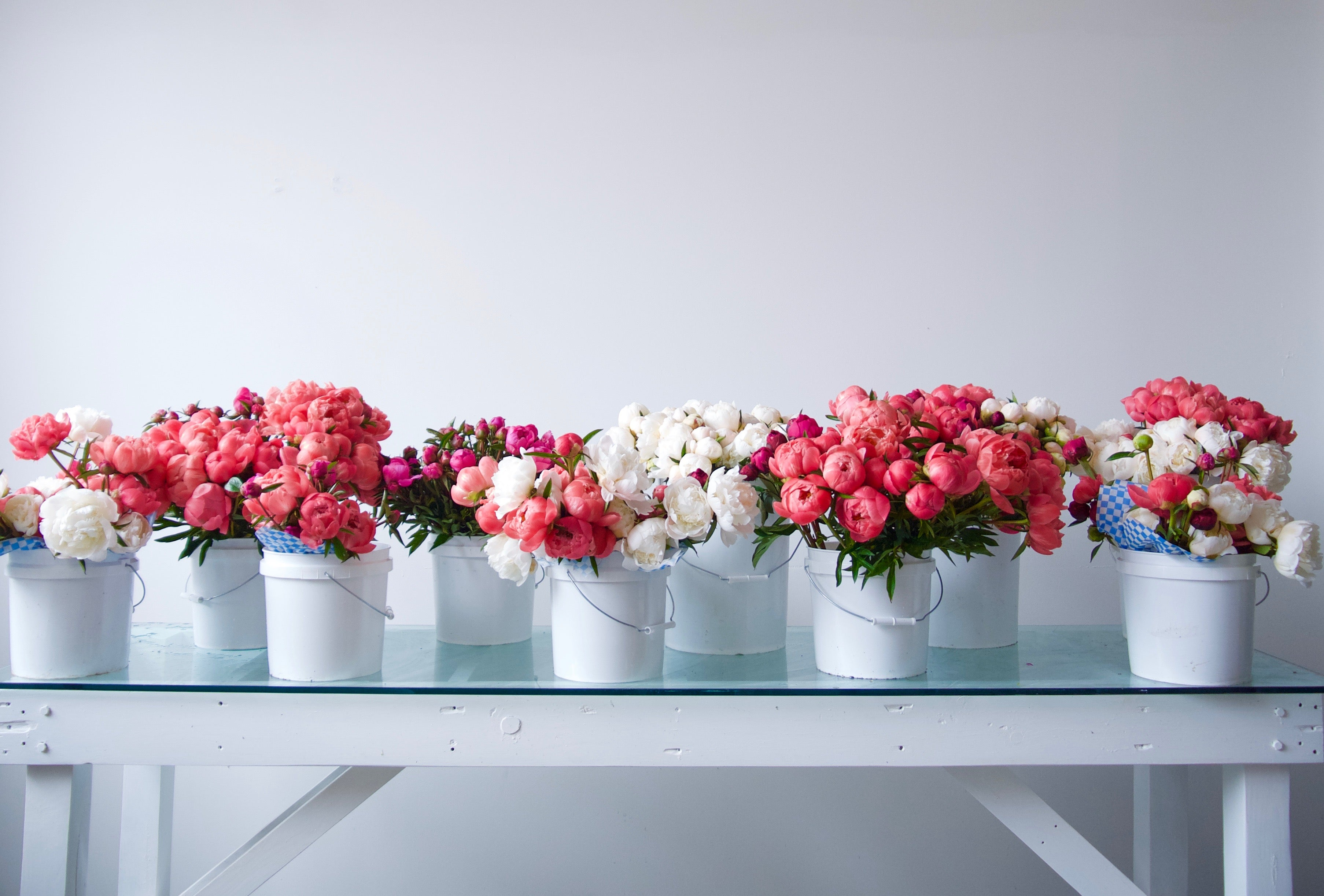 PEONIES / PER BUNCH