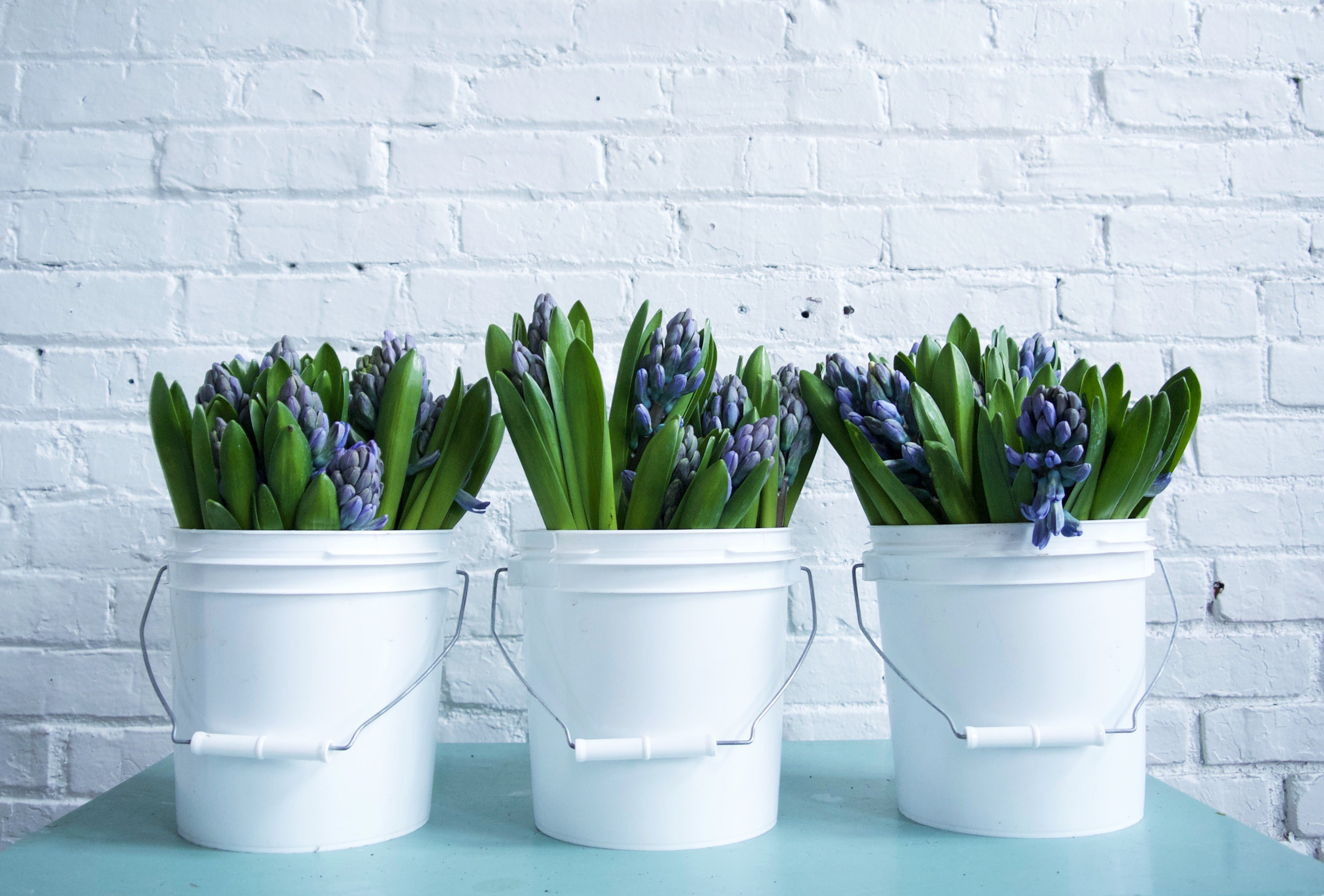 HYACINTH / PER BUNCH